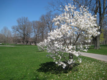 Genesee Park in mid April 2010